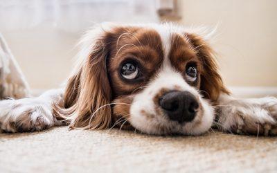 Mantrailing – eine natürliche Auslastung für den Hund